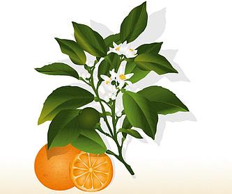 Zure sinaasappel